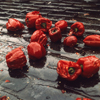 CG 002 Red peppers