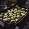 CG 047 Wet apples
